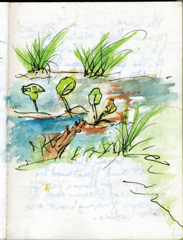 WIN15_Raquette_watercolor plants