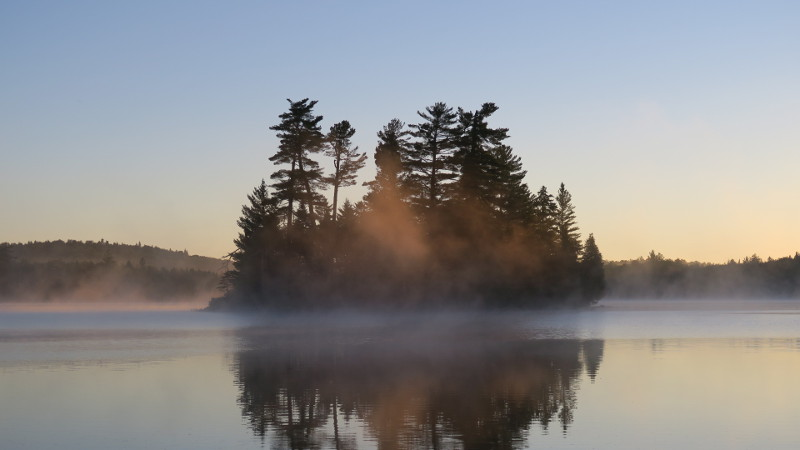 Misty pines on Tupper Lake