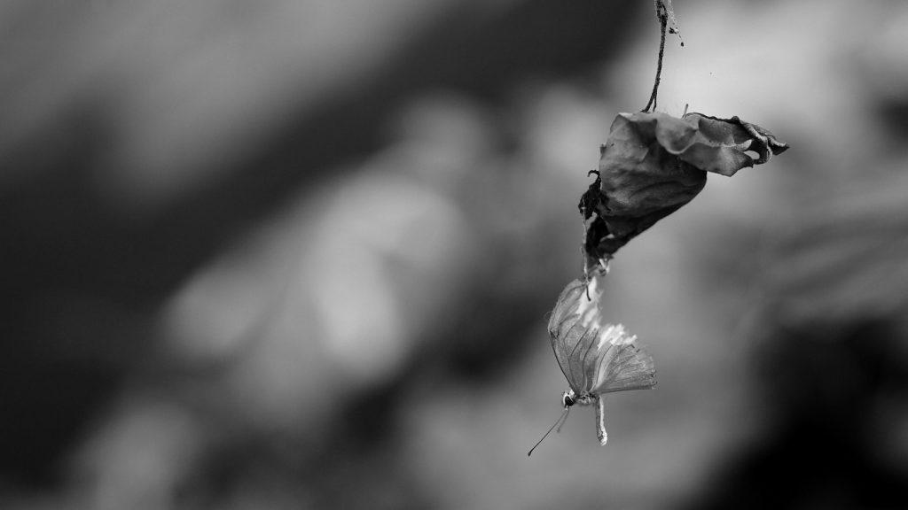 Photo by Farrukh Yonus