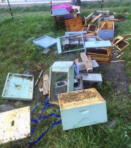 fall16-bees